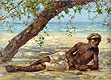 Samuel under a Tree, Jamaica | Henry Scott Tuke