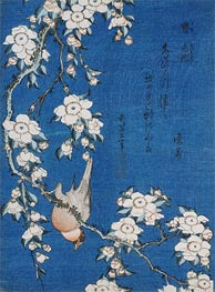 Bullfinch and Weeping Cherry Blossoms from Serie 'Flowers and Birds', 1834 by Hokusai | Painting Reproduction