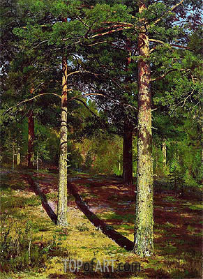 Pine Trees Lit Up by the Sun, 1886 | Ivan Shishkin| Painting Reproduction
