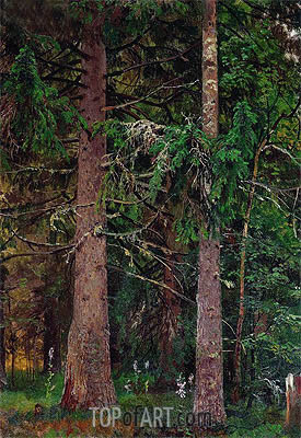 Spruce Forest, c.1889/90 | Ivan Shishkin | Painting Reproduction