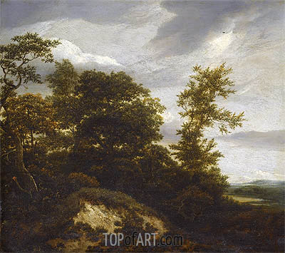 Ruisdael | A Wooded Dune Landscape, undated