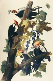 Pileated Woodpecker, Undated by Audubon | Painting Reproduction