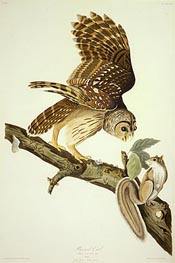 Barred Owl | Audubon | outdated