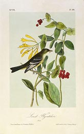 Least Flycatcher, a.1843 von Audubon | Gemälde-Reproduktion