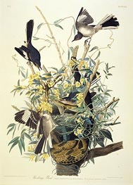 Mocking Bird, Turdus Polyglottus, c.1825 by Audubon | Painting Reproduction