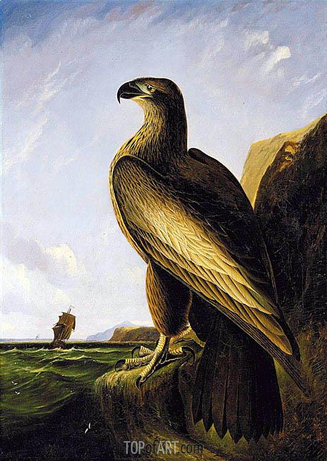 Audubon | Washington Sea Eagle, c.1836/39