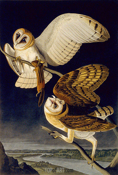 Barn Owl, 1833 | Audubon | Painting Reproduction