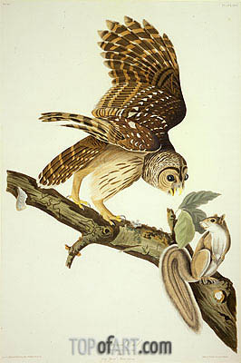 Barred Owl, 1828 | Audubon| Painting Reproduction