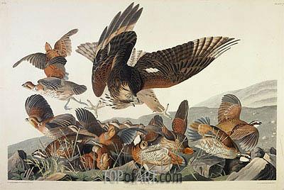Audubon | Virginian Partridge, Perdix Virginiana, 1830
