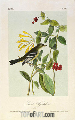 Least Flycatcher, a.1843 | Audubon| Painting Reproduction