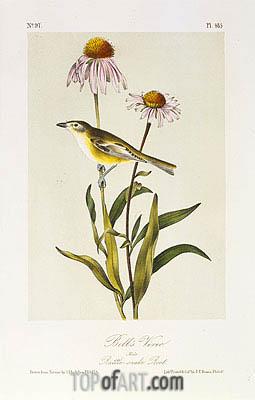Audubon | Bell's Vireo, a.1843