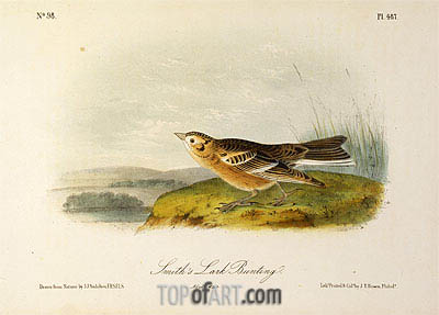 Smith's Lark Bunting, a.1843 | Audubon| Painting Reproduction