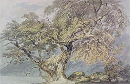 A Great Tree, c.1796 by J. M. W. Turner | Painting Reproduction