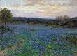 Blaue Wiesenlupine Feld bei Sonnenuntergang, undated | Julian Onderdonk