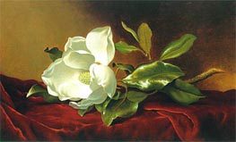 A Magnolia on Red Velvet, c.1885/95 by Martin Johnson Heade | Painting Reproduction