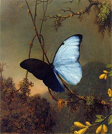 Blue Morpho Butterfly, c.1864/65 by Martin Johnson Heade | Painting Reproduction