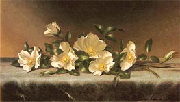 Cherokee Roses On A Light Gray Cloth, undated by Martin Johnson Heade | Painting Reproduction