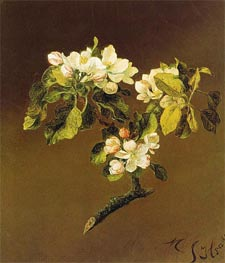 A Spray of Apple Blossoms, 1870 by Martin Johnson Heade | Painting Reproduction