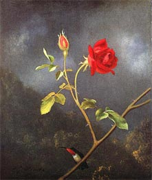 Red Rose with Ruby Throat, c.1875/80 by Martin Johnson Heade | Painting Reproduction