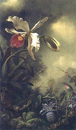 White Orchid and Hummingbird, c.1875/90 by Martin Johnson Heade | Painting Reproduction