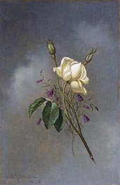 White Rose against a Cloudy Sky, 1876 by Martin Johnson Heade | Painting Reproduction