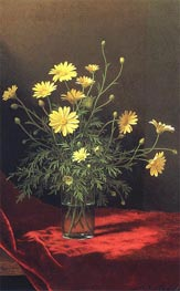 Golden Marguerites, c.1883/95 by Martin Johnson Heade | Painting Reproduction