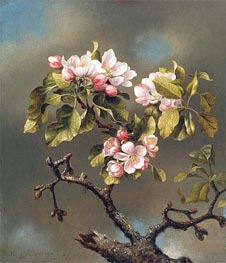 Branch of Apple Blossoms against a Cloudy Sky   Martin Johnson Heade   Painting Reproduction