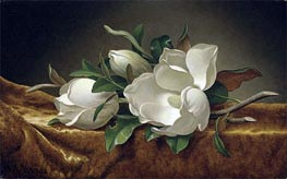 Magnolias on Gold Velvet Cloth, c.1888/90 by Martin Johnson Heade | Painting Reproduction