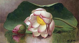 Lotus Blossom (Water Lily), c.1885/00 by Martin Johnson Heade | Painting Reproduction