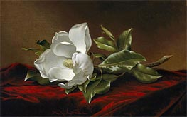 Magnolia Grandiflora, c.1885/95 by Martin Johnson Heade | Painting Reproduction