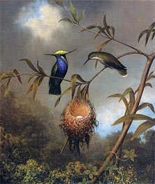 Black-Breasted Plovercrest, c.1864/65  by Martin Johnson Heade | Painting Reproduction