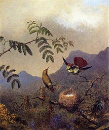 Frilled Coquette, c.1864/65  by Martin Johnson Heade | Painting Reproduction