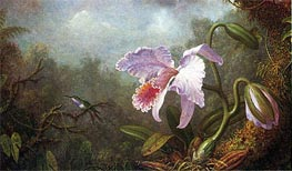 Hummingbird and Orchid, Undated by Martin Johnson Heade | Painting Reproduction
