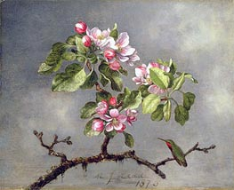Apple Blossoms and a Hummingbird, 1875 by Martin Johnson Heade | Painting Reproduction