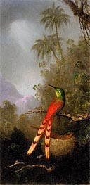 Red-Tailed Comet (hummingbird) in the Andes, c.1883 by Martin Johnson Heade | Painting Reproduction