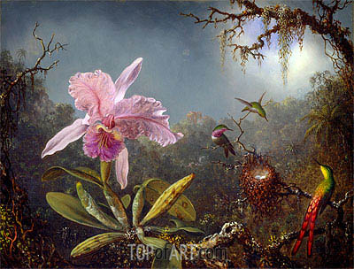 Cattleya Orchid and Three Brazilian Hummingbirds, 1871 | Martin Johnson Heade | Gemälde Reproduktion