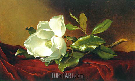 Martin Johnson Heade | A Magnolia on Red Velvet, c.1885/95