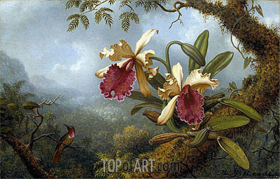 Orchids and Hummingbird, c.1875/83 | Martin Johnson Heade| Painting Reproduction