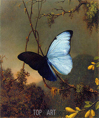 Blue Morpho Butterfly, c.1864/65 | Martin Johnson Heade | Gemälde Reproduktion