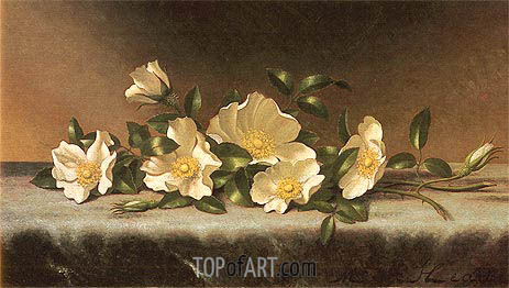 Cherokee Roses On A Light Gray Cloth, undated | Martin Johnson Heade | Painting Reproduction