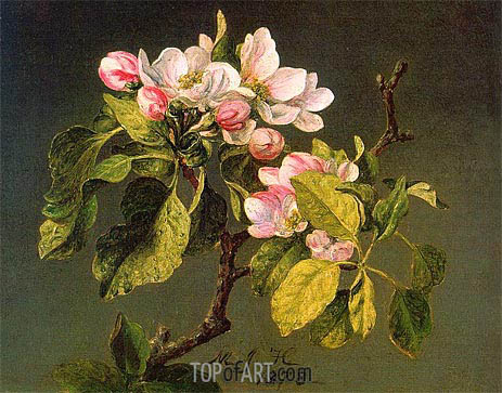 Martin Johnson Heade | A Branch of Apple Blossoms and Buds, 1878