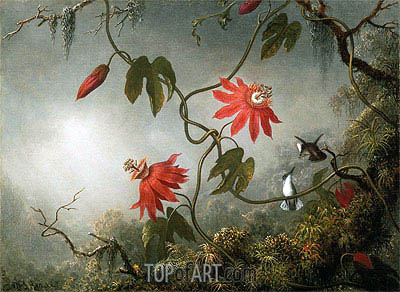 Martin Johnson Heade | Passion Flowers and Hummingbirds, c.1870/83