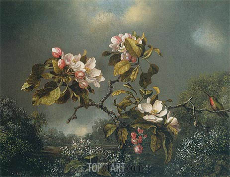 Martin Johnson Heade | Apple Blossoms and Hummingbird, 1871
