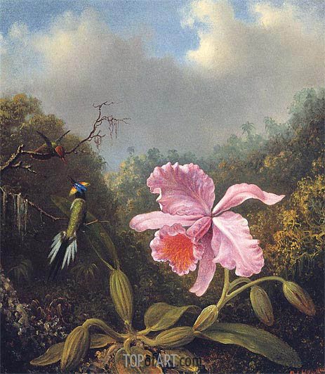 Fighting Hummingbirds with Pink Orchid, c.1875/80 | Martin Johnson Heade | Gemälde Reproduktion