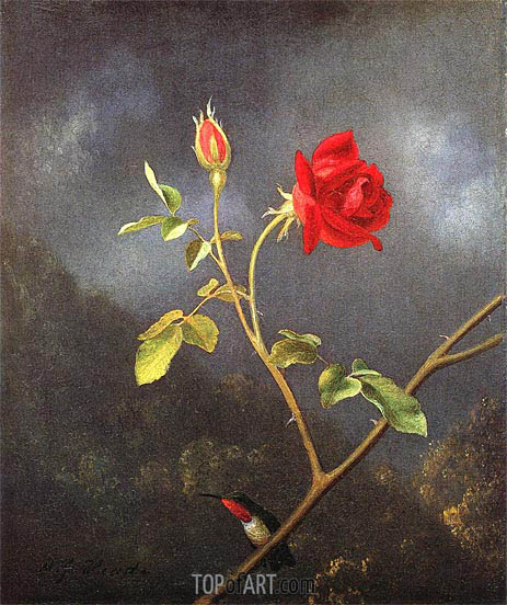 Red Rose with Ruby Throat, c.1875/80 | Martin Johnson Heade | Painting Reproduction