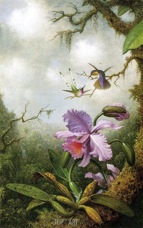 Two Hummingbirds with a Pink Orchid, c.1875/90 | Martin Johnson Heade | Painting Reproduction