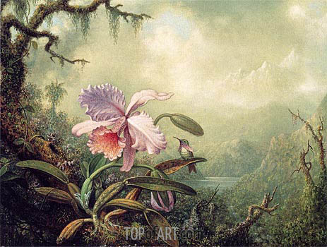 Heliodore's Woodstar and a Pink Orchid, c.1875/90 | Martin Johnson Heade | Painting Reproduction