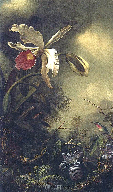 White Orchid and Hummingbird, c.1875/90 | Martin Johnson Heade | Gemälde Reproduktion