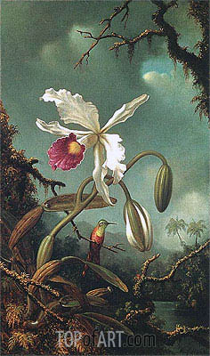 White Brazilian Orchid, c.1875/90 | Martin Johnson Heade | Painting Reproduction
