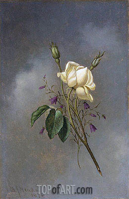 White Rose against a Cloudy Sky, 1876 | Martin Johnson Heade | Painting Reproduction